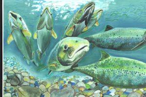 Международный день мигрирующих рыб