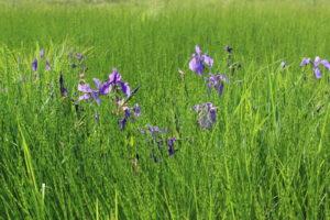 «Год водно-болотных угодий-2021» в заповеднике «Бастак»